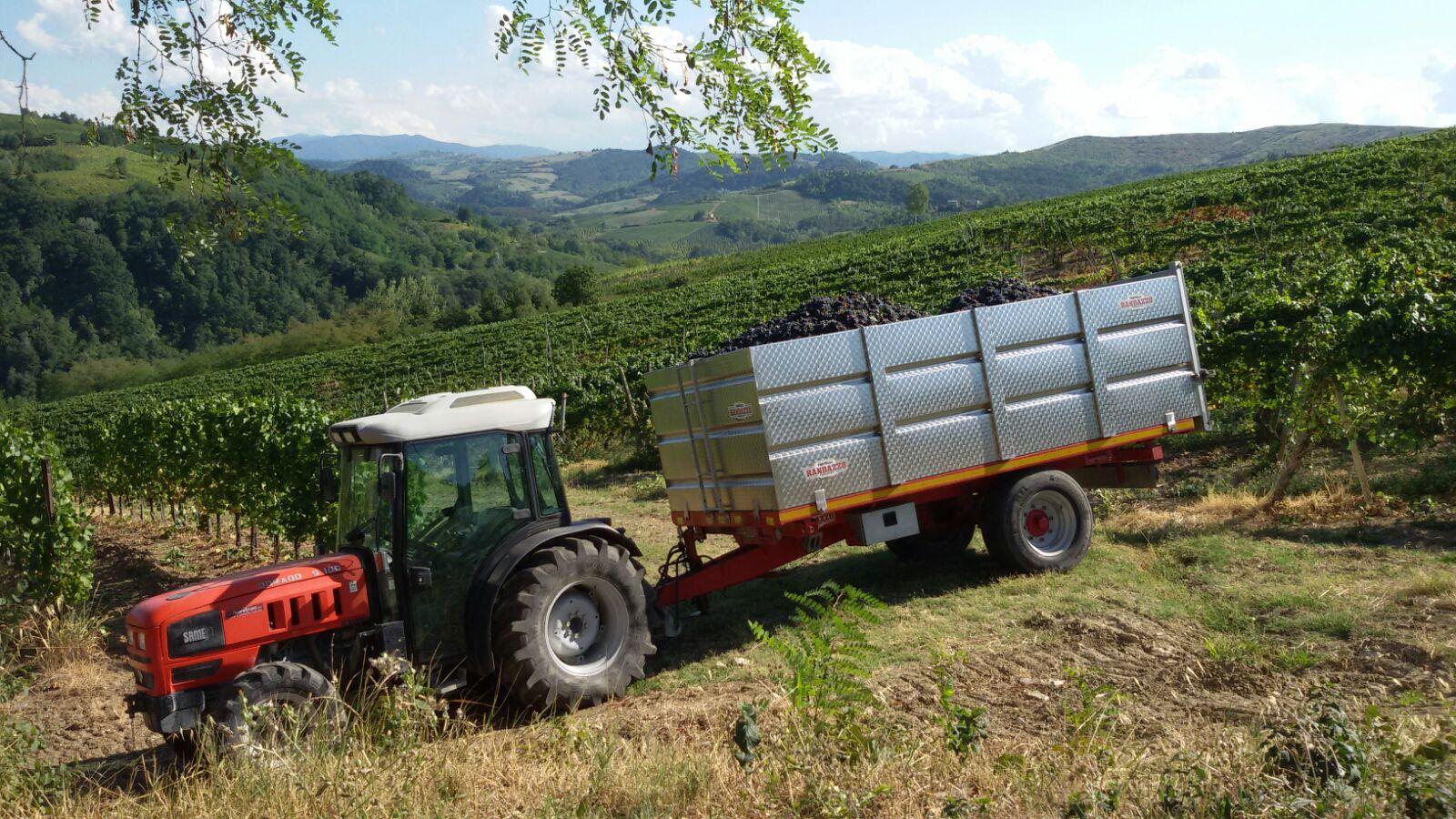 italia vigneto vitivinicoltura enografia