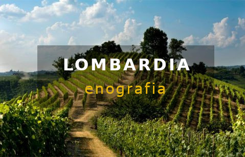 enografia lombardia vini